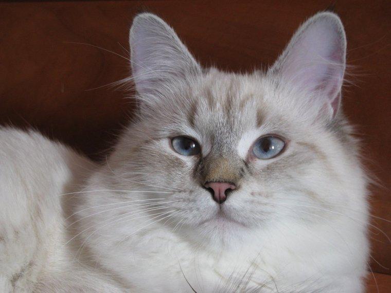 Почему кошки умнее нас?